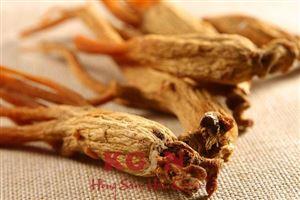 Tìm hiểu về Hồng sâm - Công dụng của Hồng sâm đối với sức khỏe